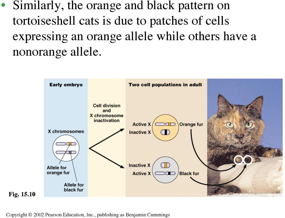 of cells expressing an orange allele