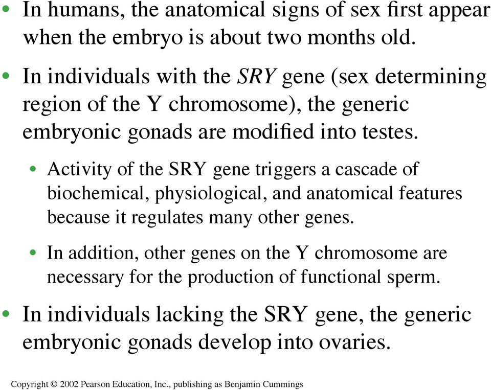Activity of the SRY gene triggers a cascade of biochemical, physiological, and anatomical features because it regulates many other genes.