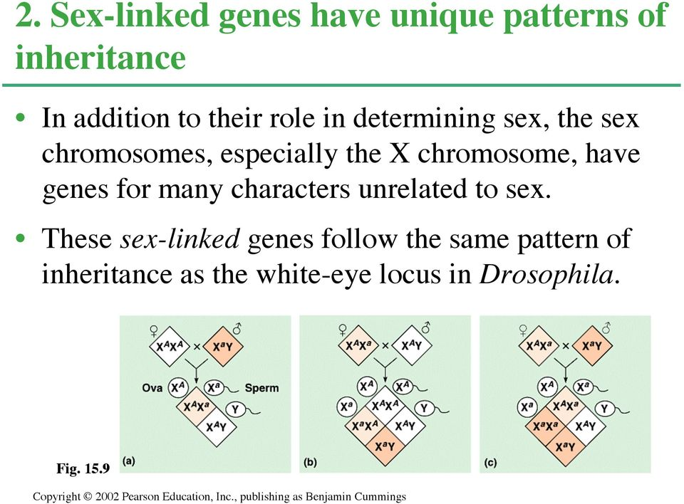 have genes for many characters unrelated to sex.