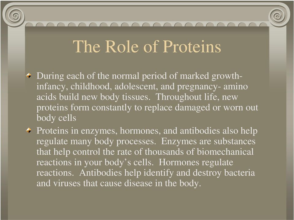 Throughout life, new proteins form constantly to replace damaged or worn out body cells Proteins in enzymes, hormones, and antibodies also
