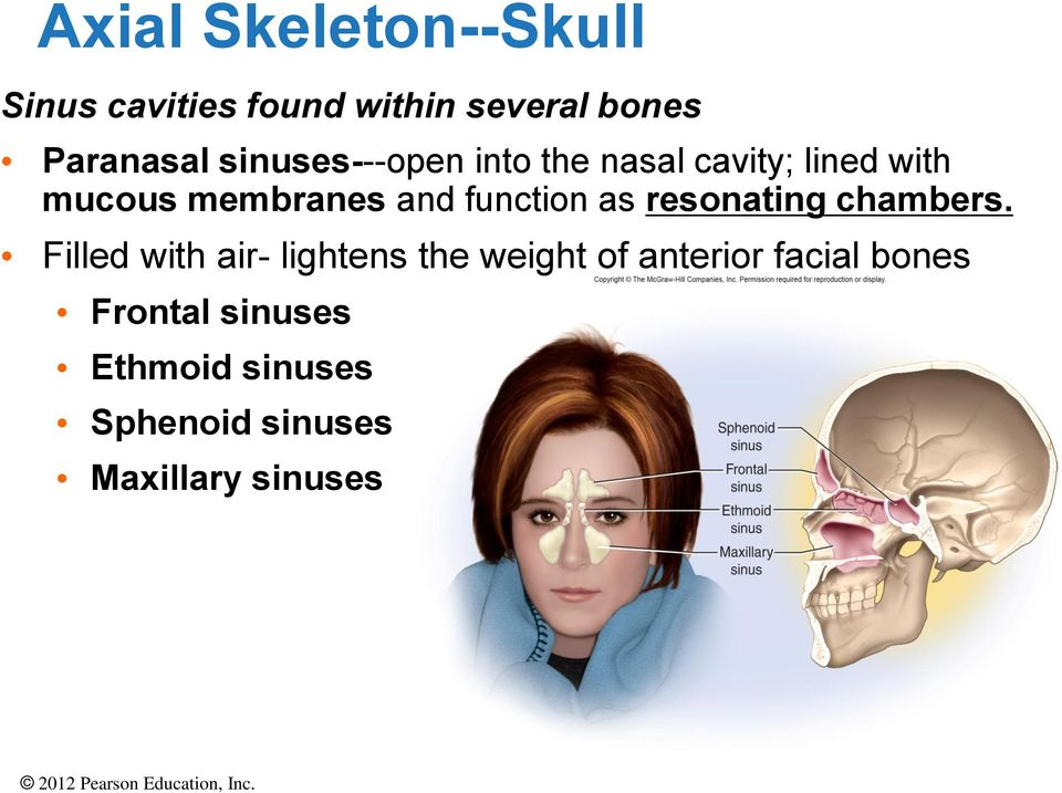 The Axial Skeleton PowerPoint Lecture Presentations