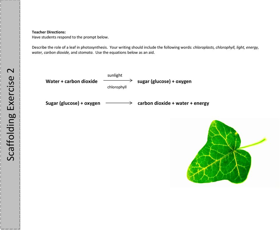 Your writing should include the following words: chloroplasts, chlorophyll, light, energy, water, carbon