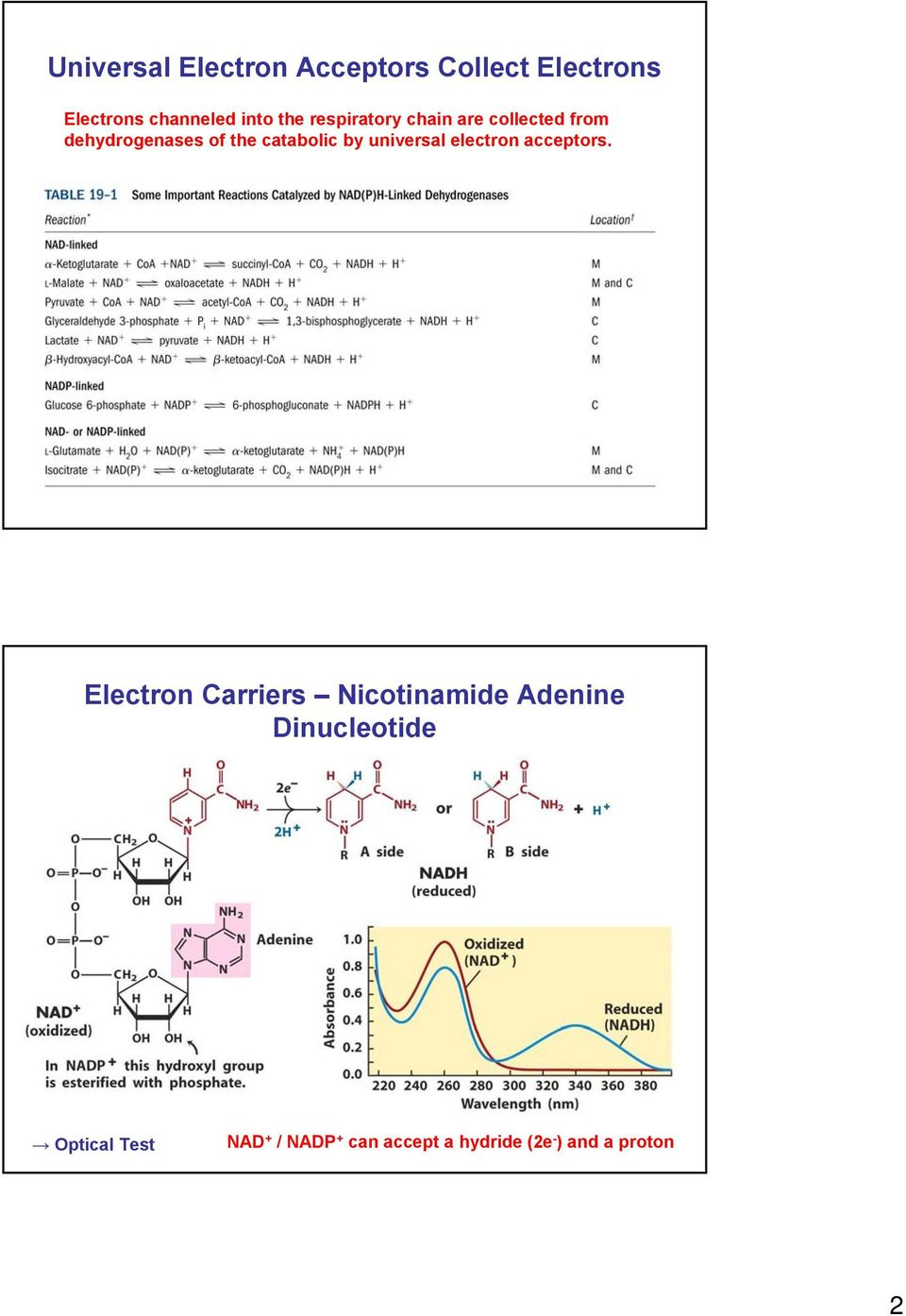 universal electron acceptors.