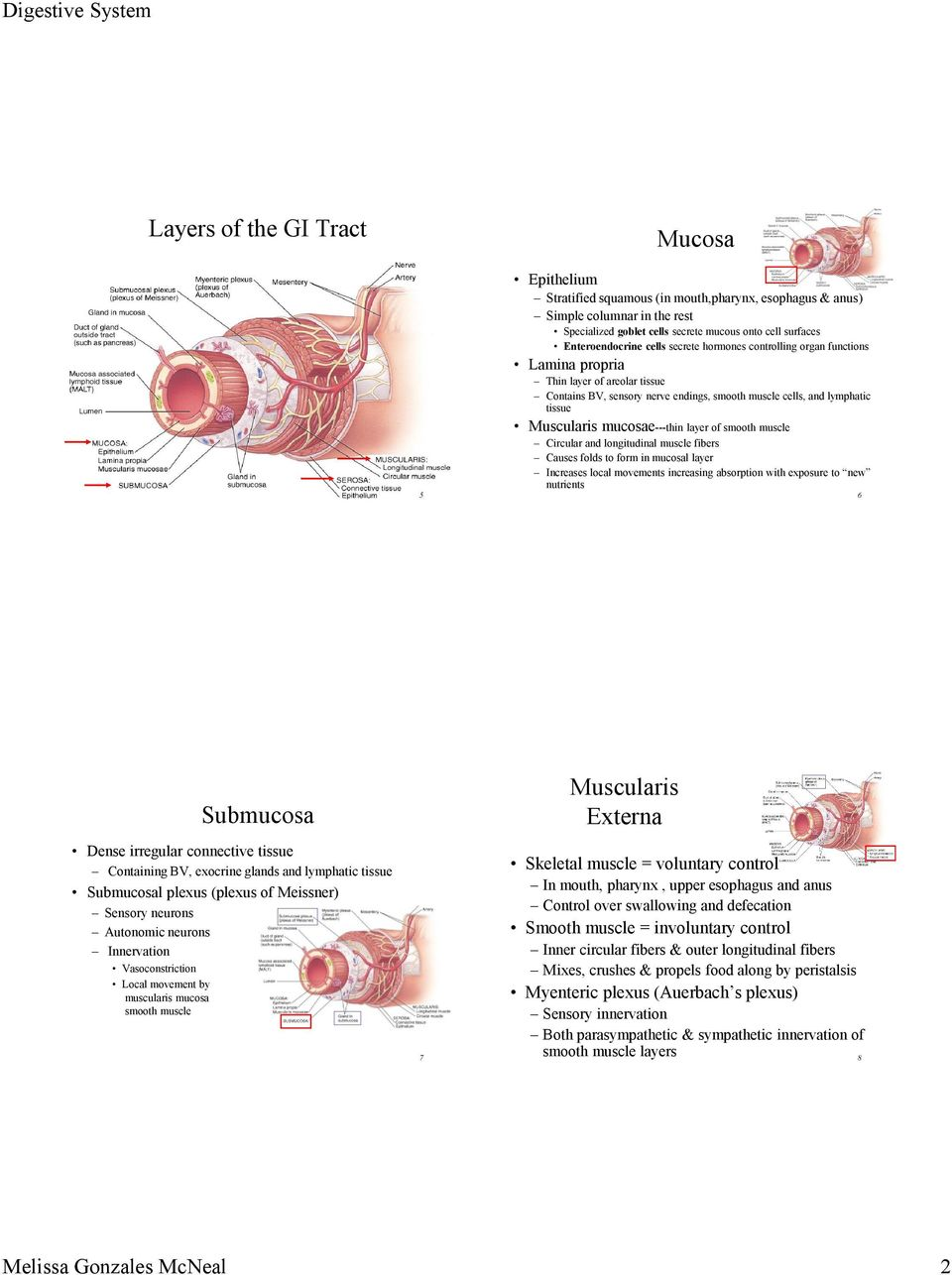mucosae---thin layer of smooth muscle Circular and longitudinal muscle fibers Causes folds to form in mucosal layer Increases local movements increasing absorption with exposure to new nutrients 6