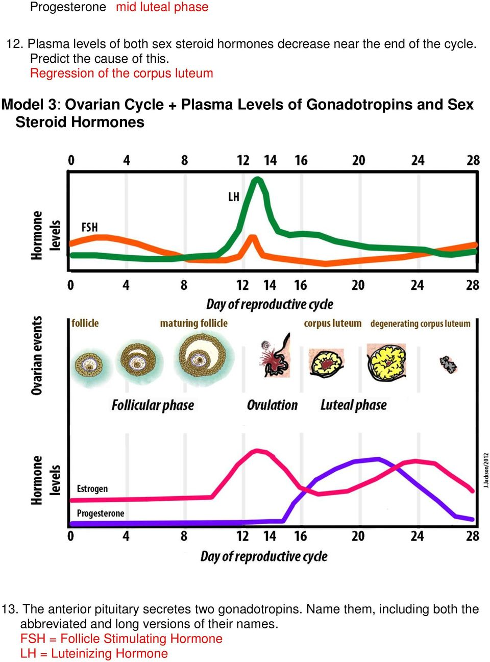 The menstrual cycle model 1 ovarian cycle follicular cells pdf regression of the corpus luteum model 3 ovarian cycle plasma levels of gonadotropins and ibookread Read Online