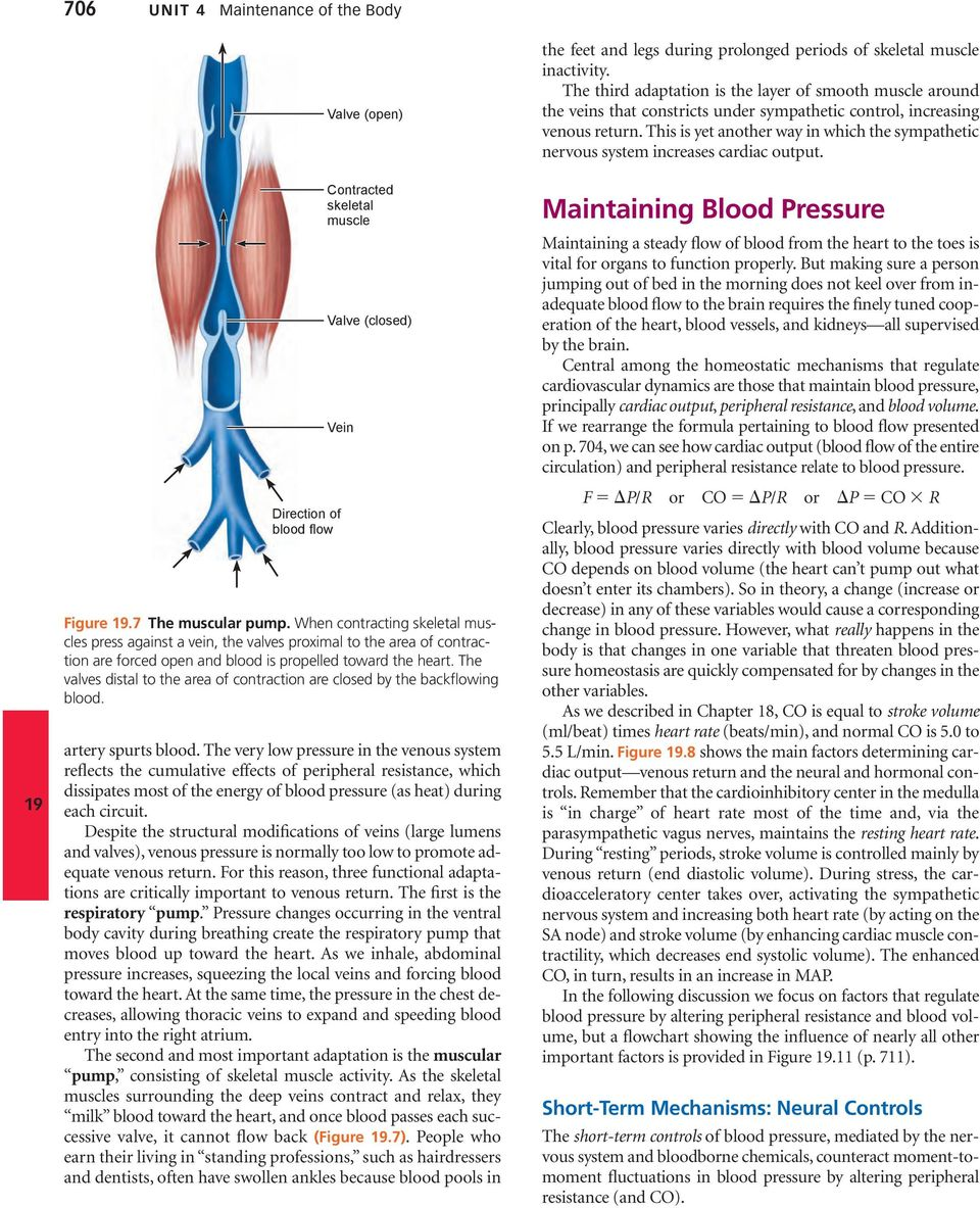 The valves distal to the area of contraction are closed by the backflowing blood. spurts blood.