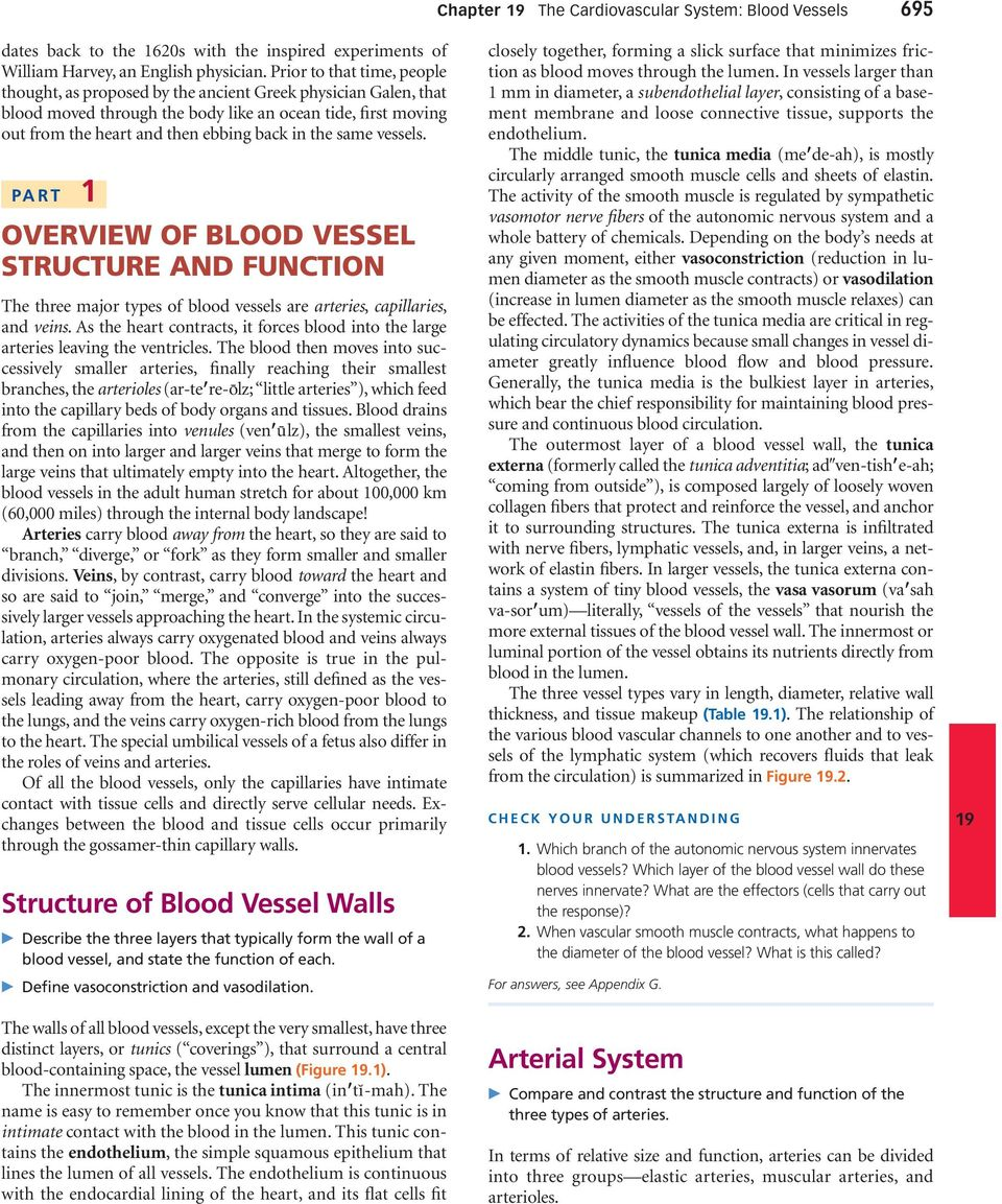 same vessels. PART 1 OVERVIEW OF BLOOD VESSEL STRUCTURE AND FUNCTION The three major types of blood vessels are arteries, capillaries, and s.