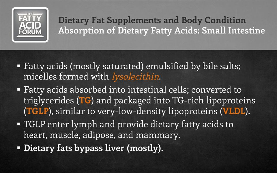 Fatty acids absorbed into intestinal cells; converted to triglycerides (TG) and packaged into TG-rich