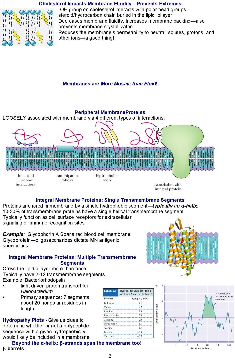 Peripheral MembraneProteins LOOSELY associated with membrane via 4 different types of interactions: Integral Membrane Proteins: Single Transmembrane Segments Proteins anchored in membrane by a single