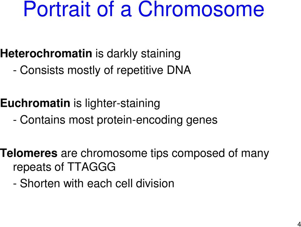 - Contains most protein-encoding genes Telomeres are chromosome