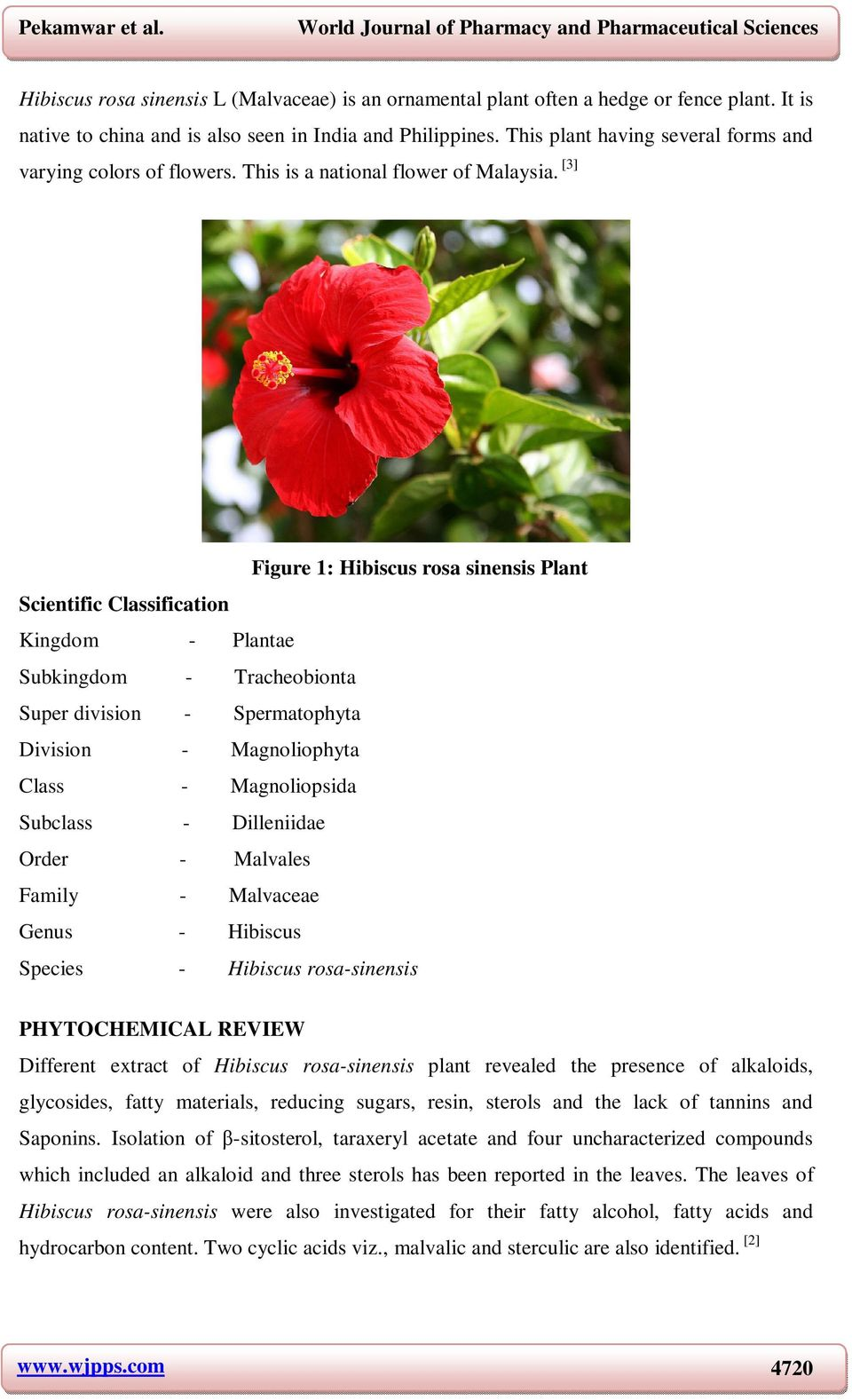 Hibiscus Rosa Sinensis A Review On Ornamental Plant Pdf