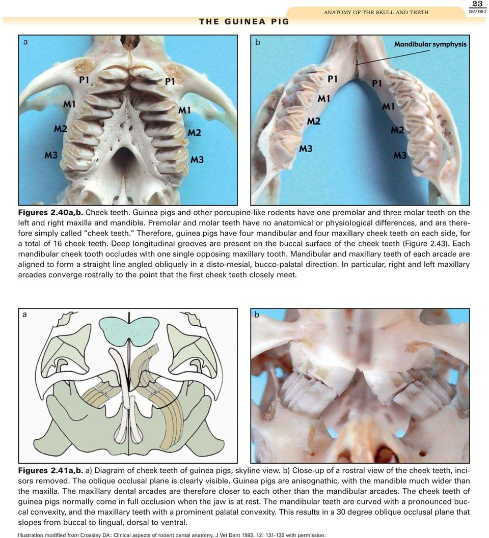Rabbit And Rodent Dentistry Pdf