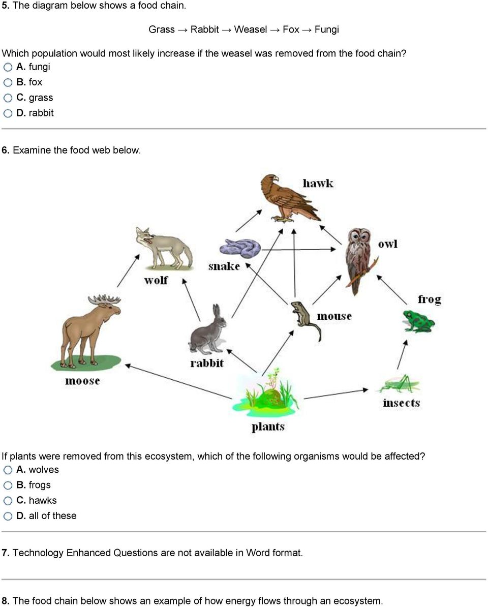 fungi B. fox C. grass D. rabbit 6. Examine the food web below.