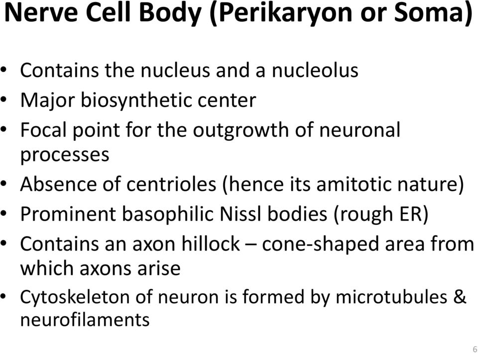 amitotic nature) Prominent basophilic Nissl bodies (rough ER) Contains an axon hillock