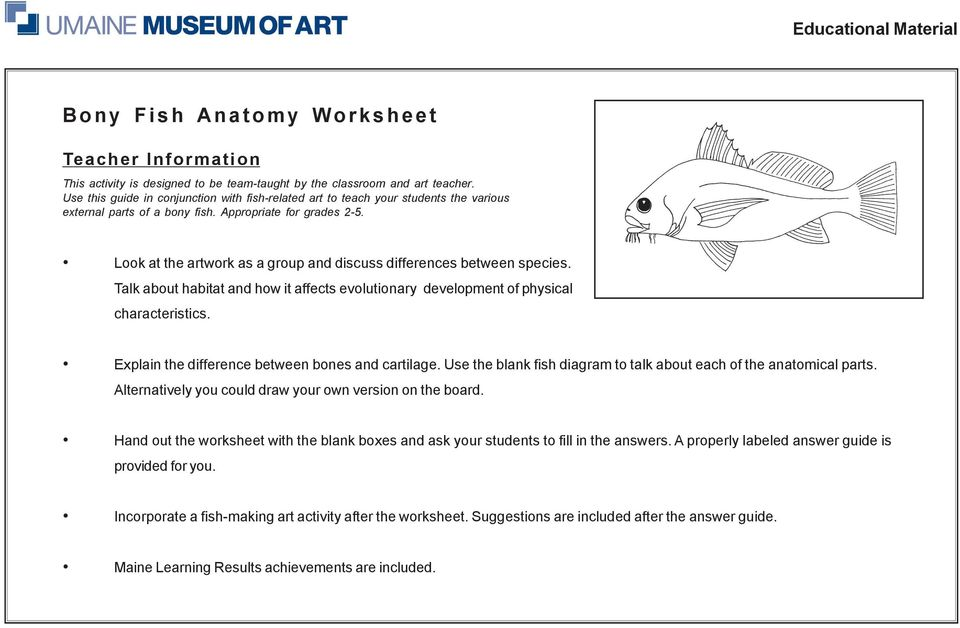 Bony Fish Anatomy Worksheet Pdf