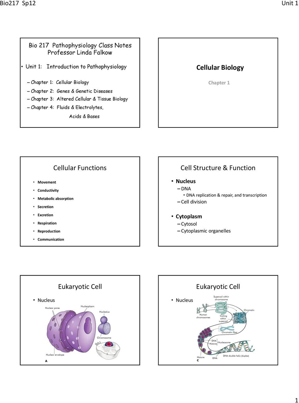 Cellular Biology Functions Cell Structure Function Of Eukaryotic Movement Conductivity Metabolic Absorption Secretion Excretion Respiration Reproduction Communication Nucleus