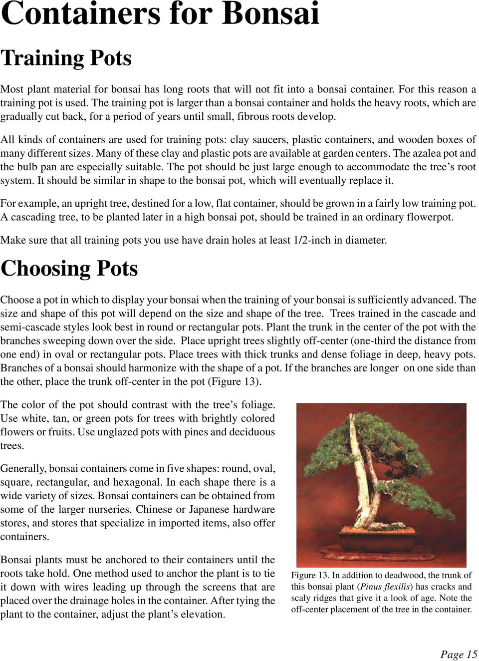 Growing Bonsai Publication Information Page 1 Pdf Wiring Wisteria All Kinds Of Containers Are Used For Training Pots Clay Saucers Plastic