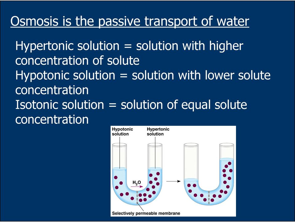 Hypotonic solution = solution with lower solute
