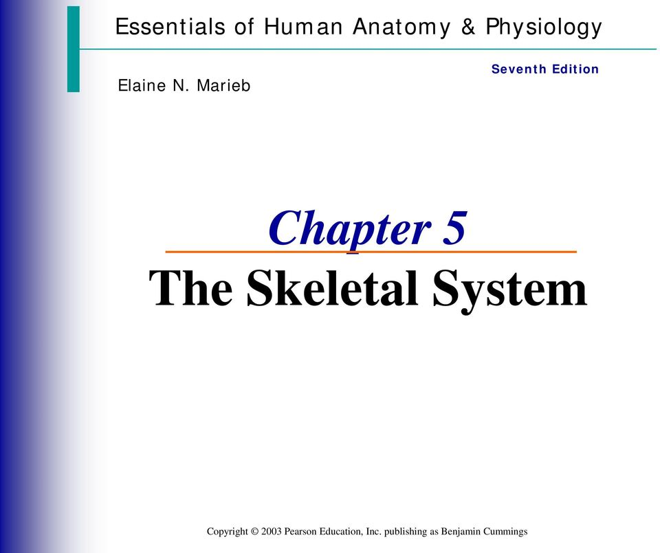 Chapter 5 The Skeletal System - PDF