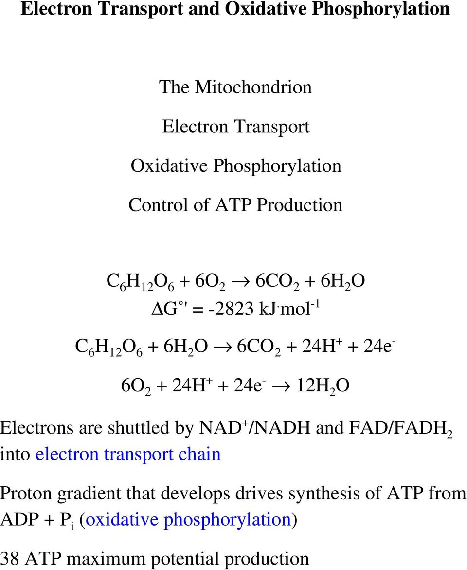 mol -1 C 6 H 12 O 6 + 6H 2 O 6CO 2 + 24H + + 24e - 6O 2 + 24H + + 24e - 12H 2 O Electrons are shuttled by NAD + /NADH