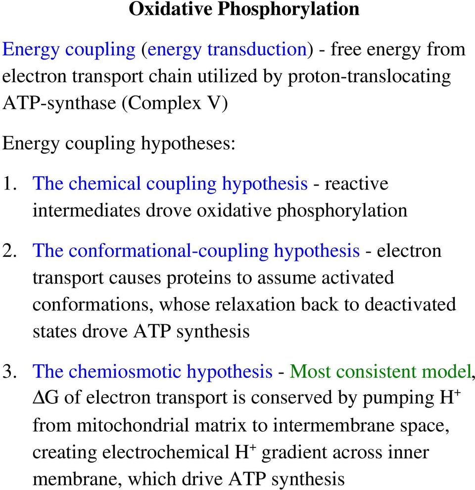 The conformational-coupling hypothesis - electron transport causes proteins to assume activated conformations, whose relaxation back to deactivated states drove ATP synthesis 3.