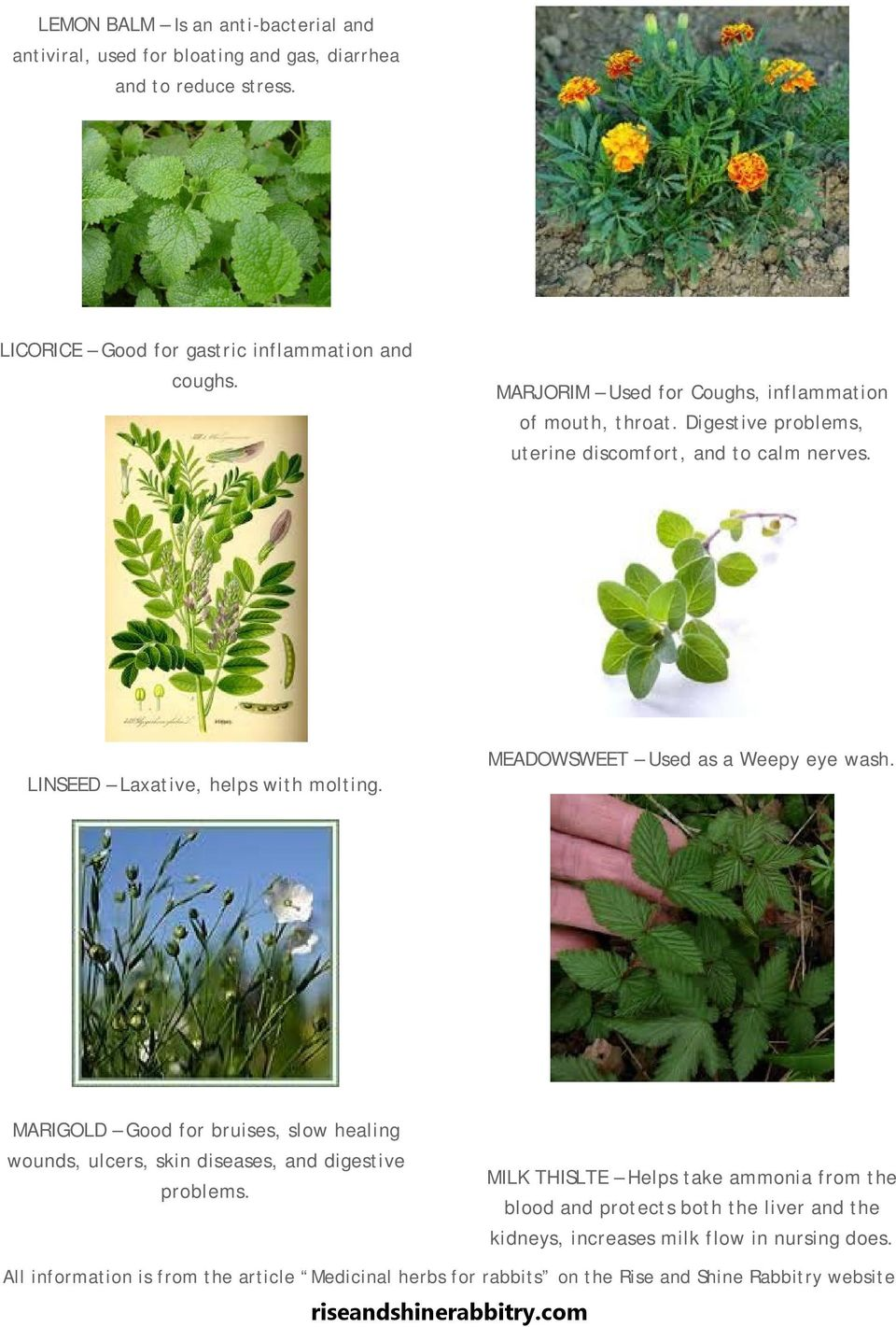 Herbs For Ulcers