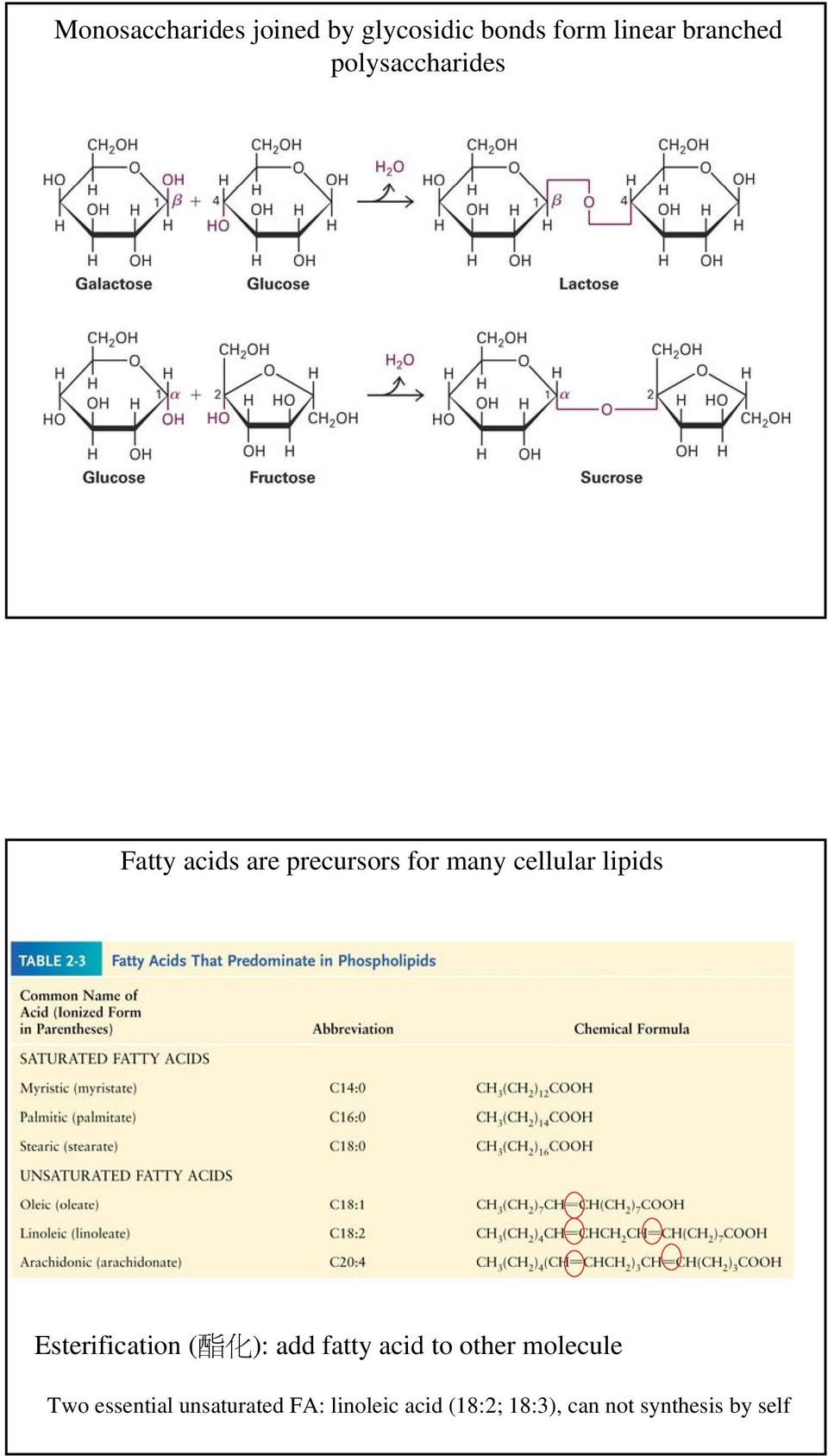 Esterification ( 酯 化 ): add fatty acid to other molecule Two