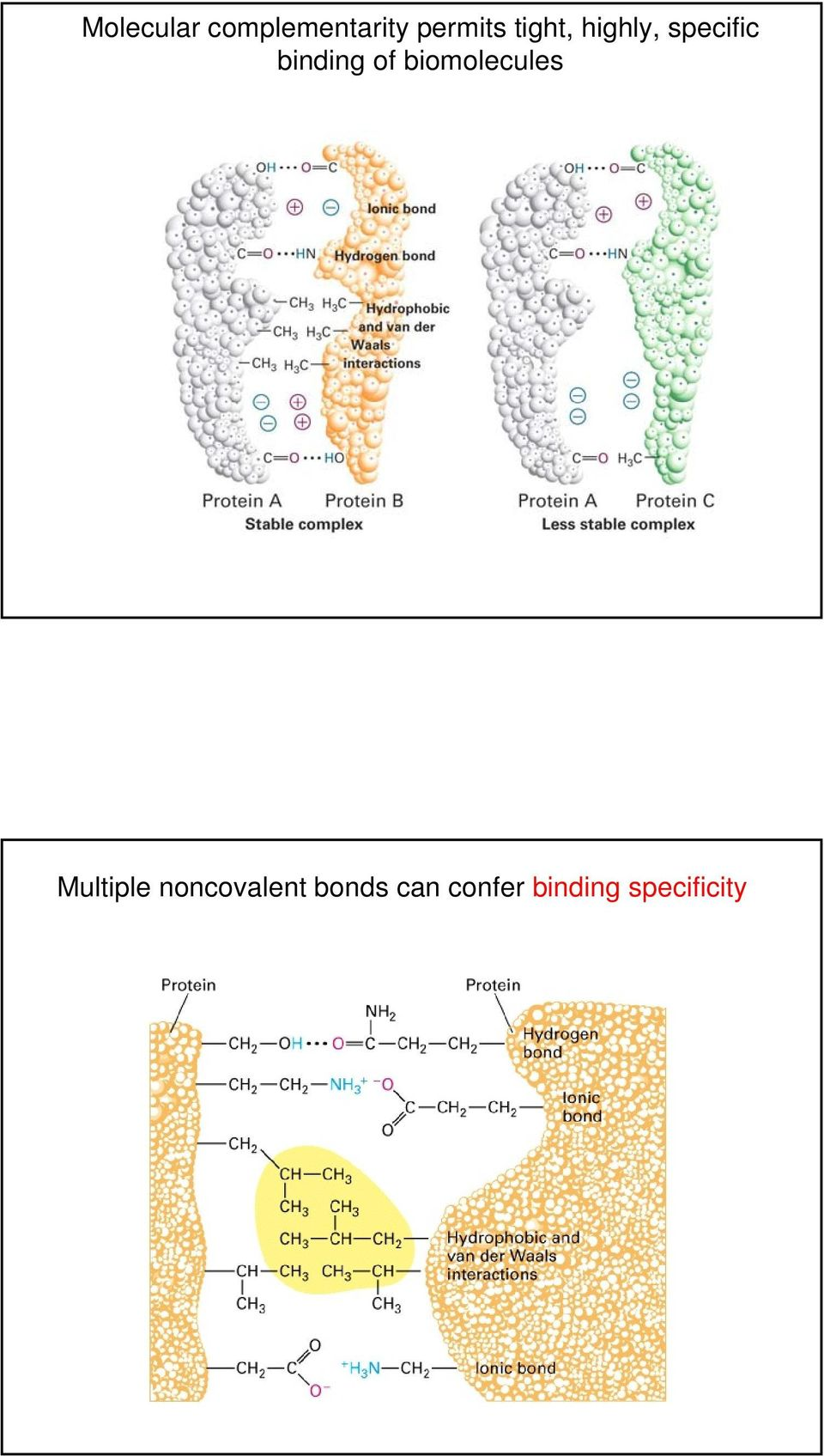biomolecules Multiple noncovalent