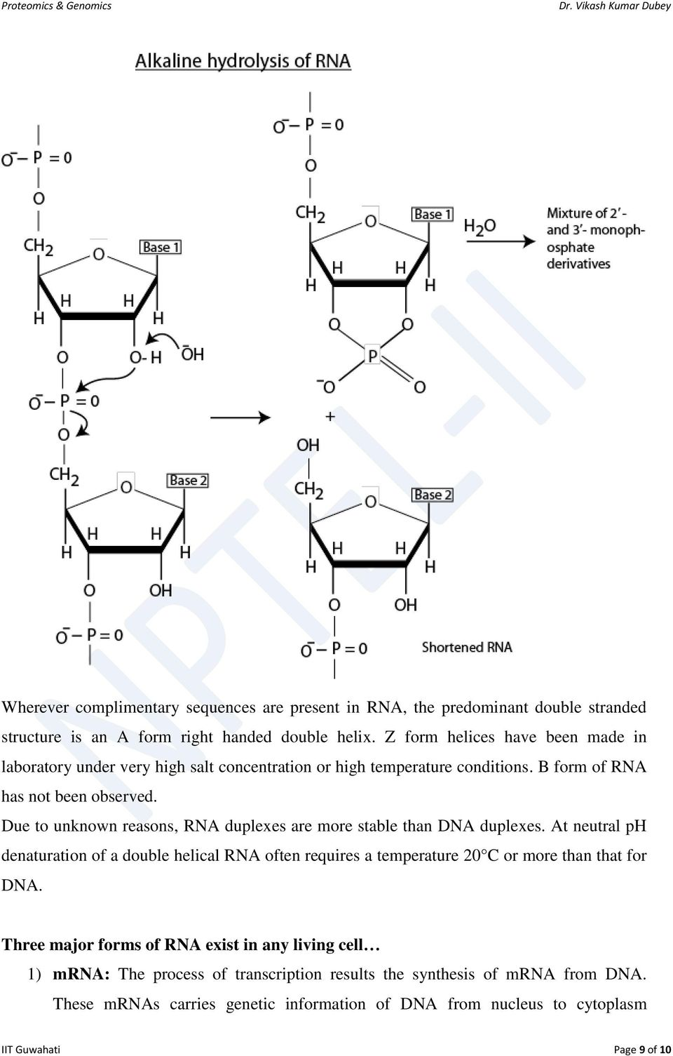 Due to unknown reasons, RNA duplexes are more stable than DNA duplexes.