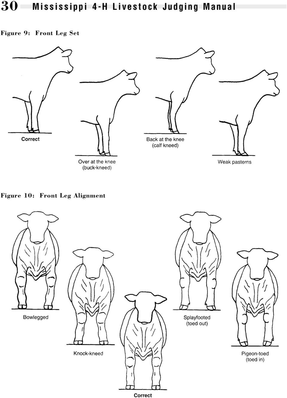 BREEDS OF BEEF CATTLE - PDF