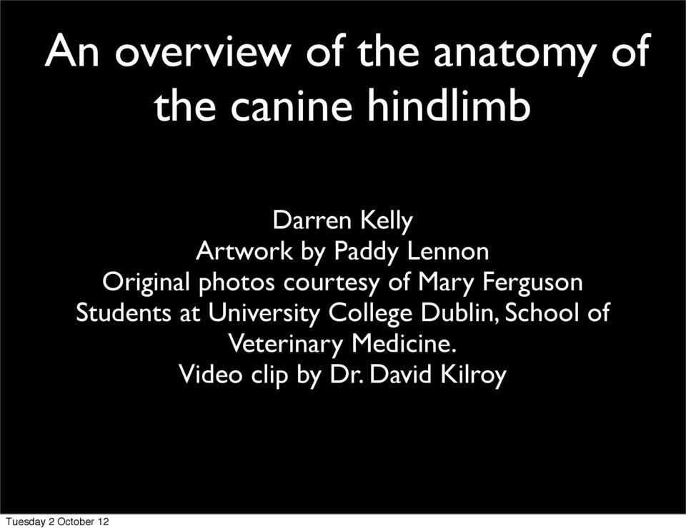 An Overview Of The Anatomy Of The Canine Hindlimb Pdf