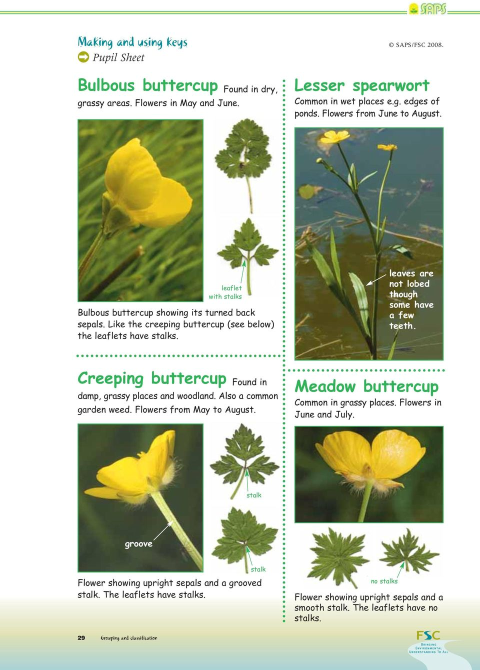 Creeping buttercup Found in damp, grassy places and woodland. Also a common garden weed. Flowers from May to August. Meadow buttercup Common in grassy places. Flowers in June and July.