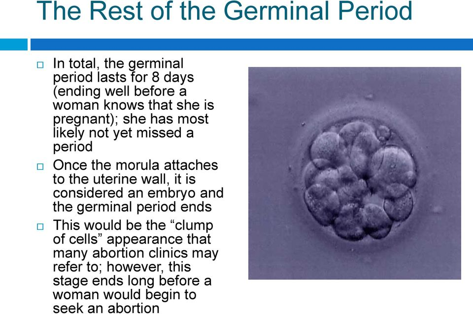 uterine wall, it is considered an embryo and the germinal period ends This would be the clump of cells