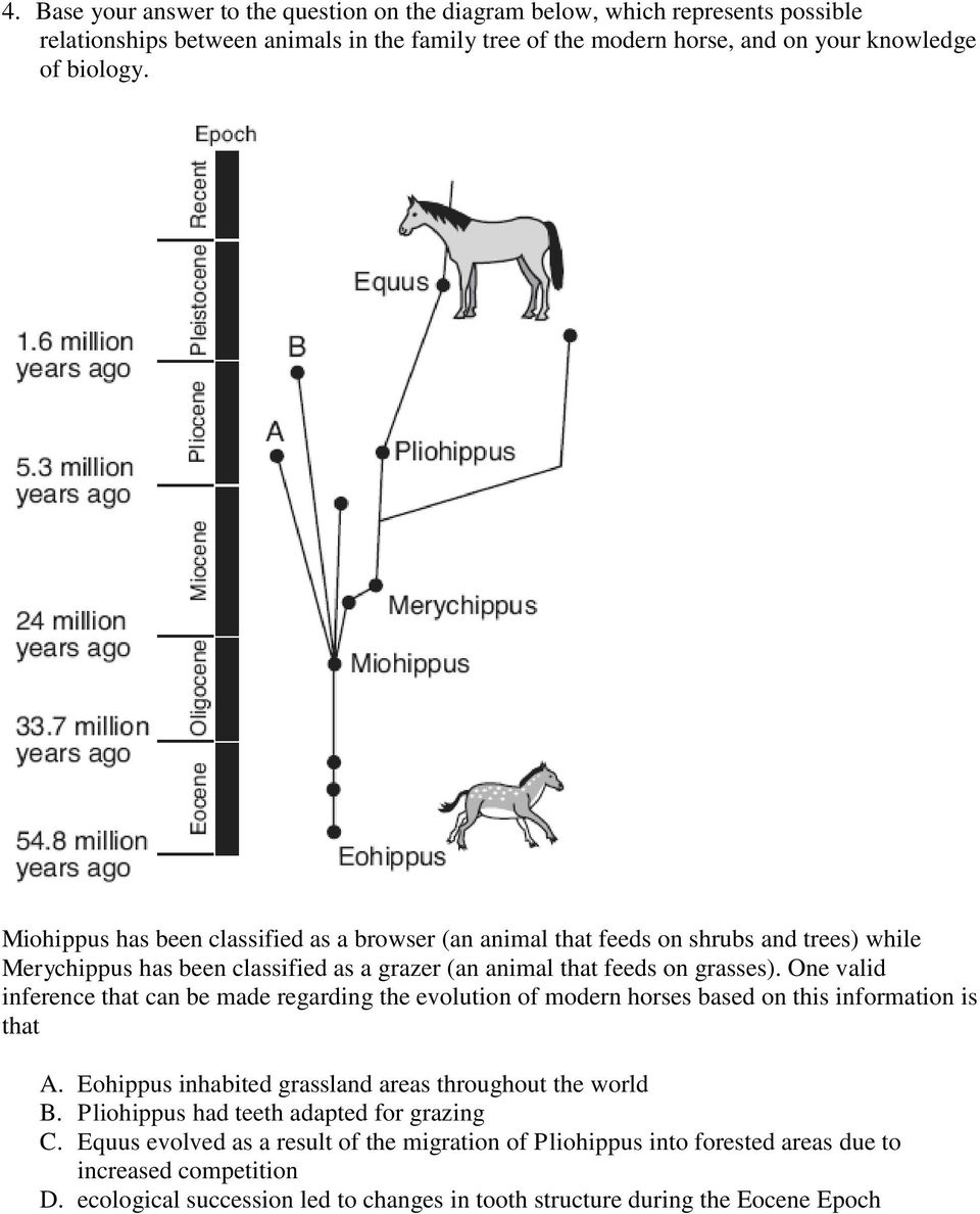 One valid inference that can be made regarding the evolution of modern horses based on this information is that A. Eohippus inhabited grassland areas throughout the world B.