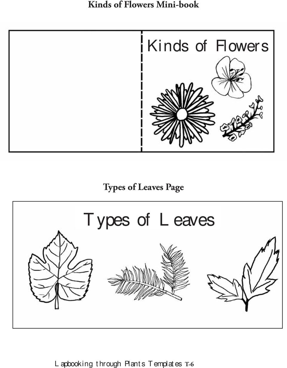 Leaves Page Types of Leaves