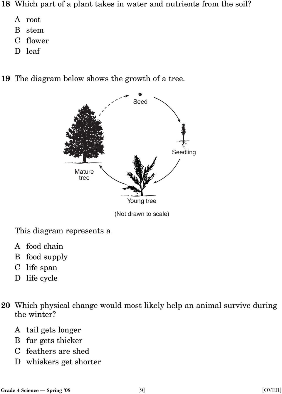 Seed Seedling Mature tree This diagram represents a A food chain B food supply C life span D life cycle Young tree (Not