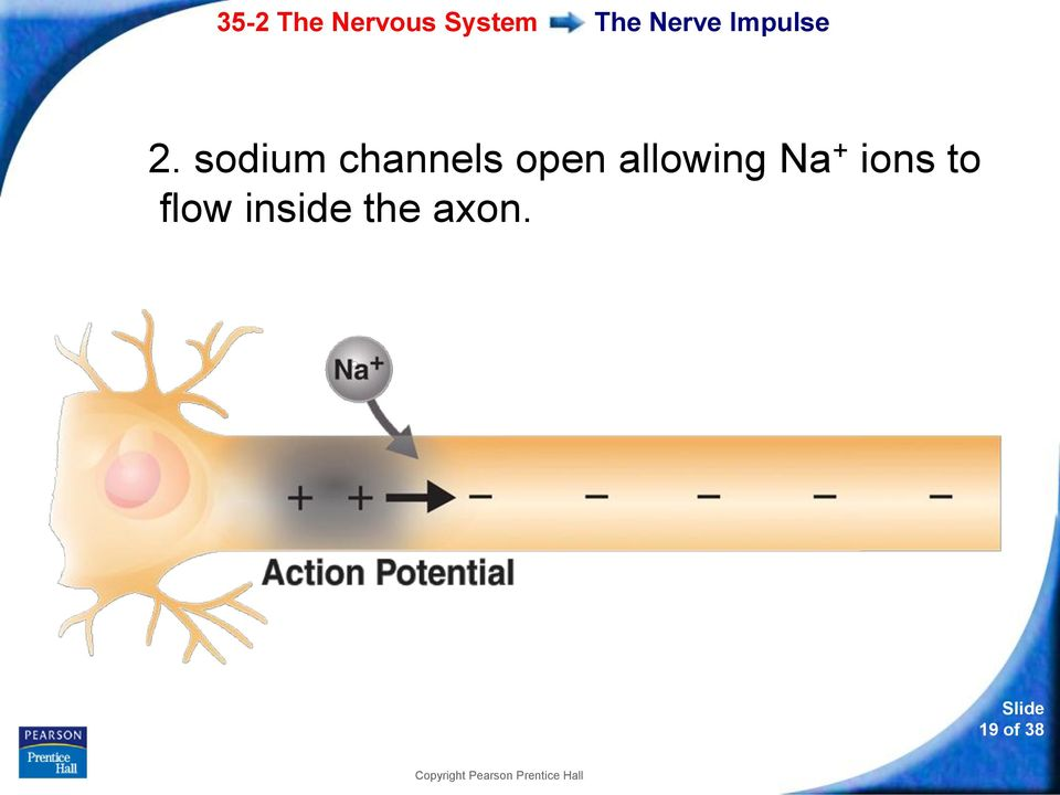 allowing Na + ions to