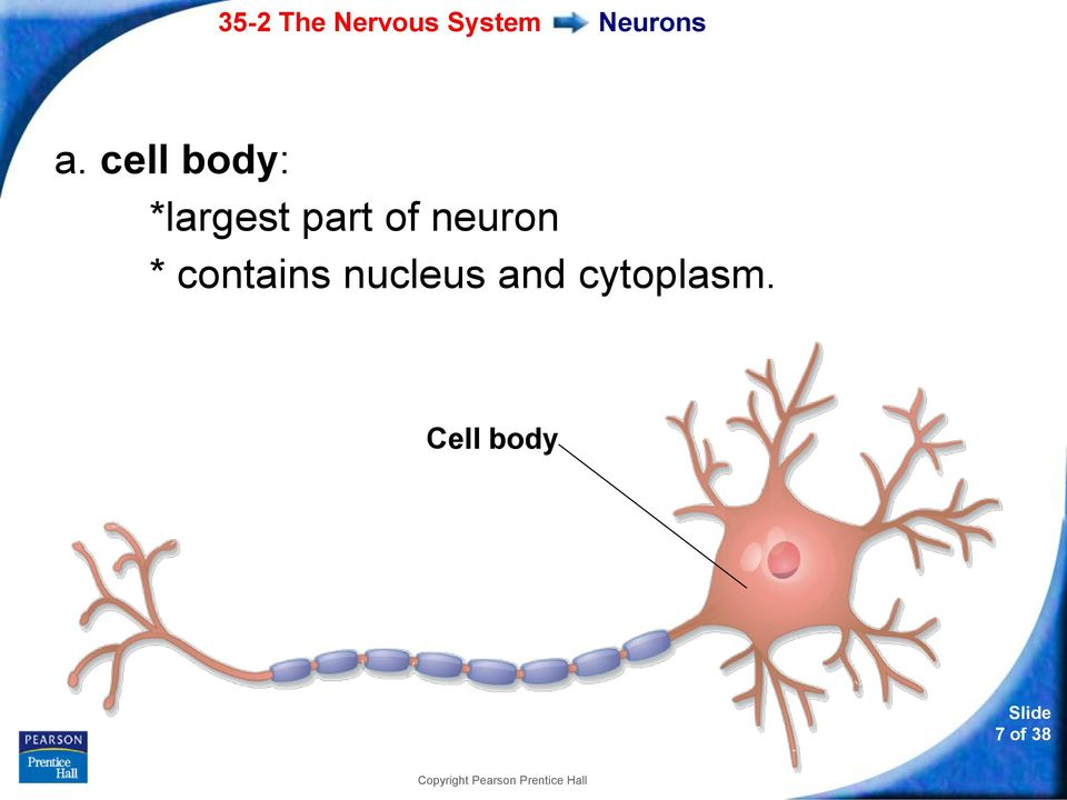 of neuron * contains
