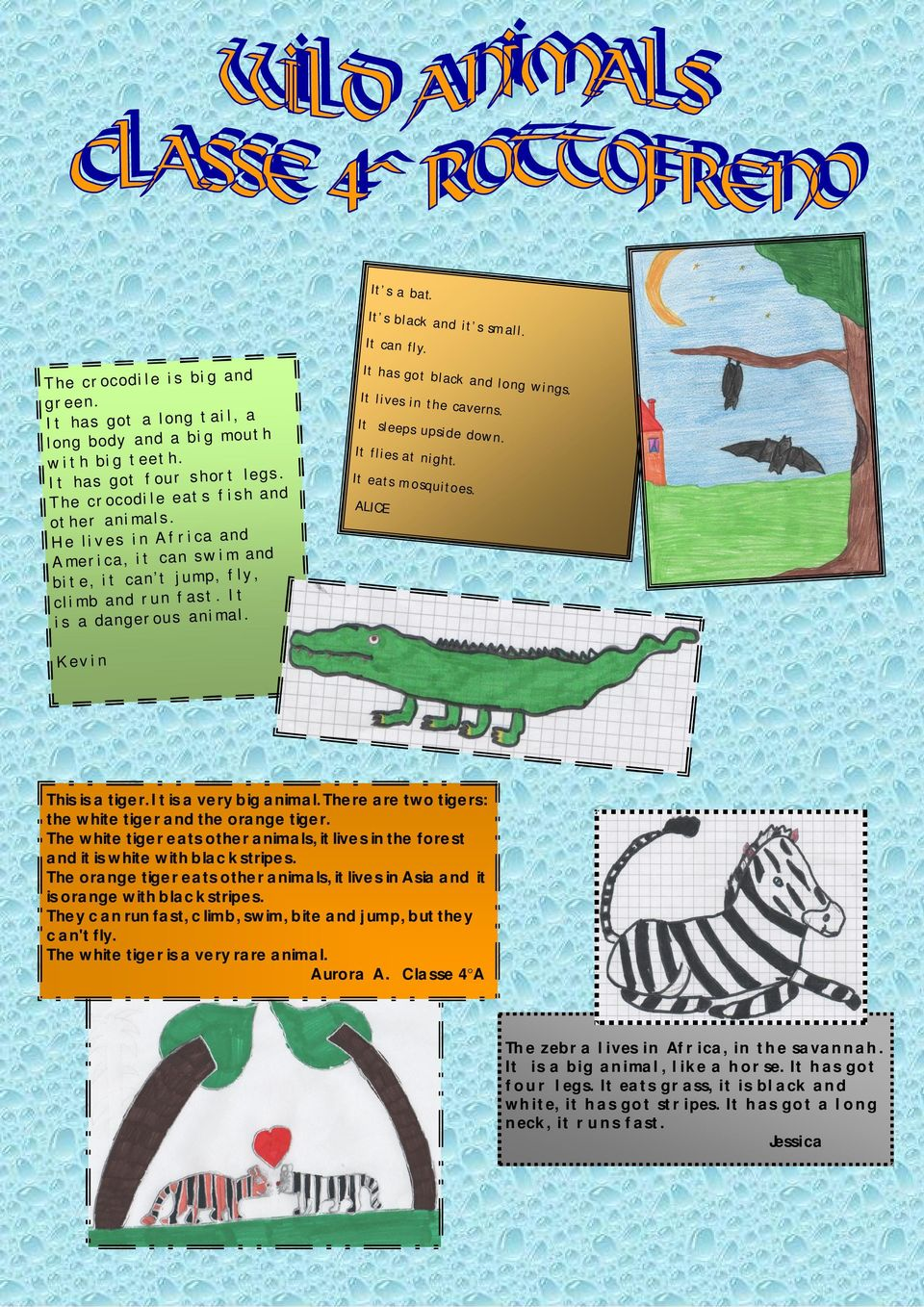It has got black and long wings. It lives in the caverns. It sleeps upside down. It flies at night. It eats mosquitoes. ALICE Kevin This is a tiger. It is a very big animal.