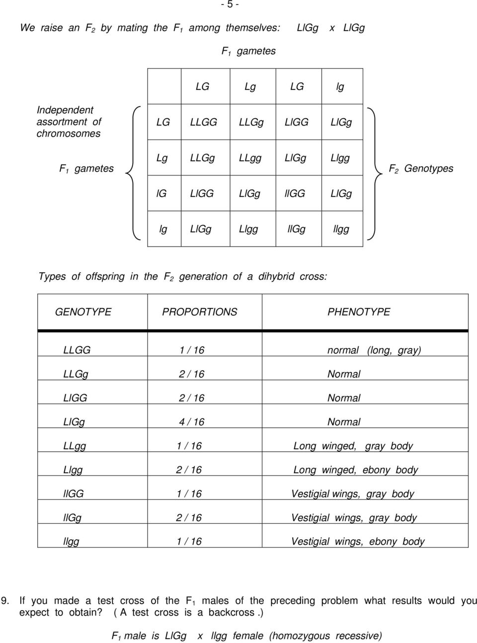 Bestseller: Chapter 10 Dihybrid Cross Worksheet Answers ...