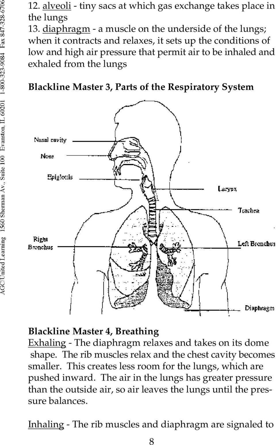 The Respiratory System From The Human Body Systems Series
