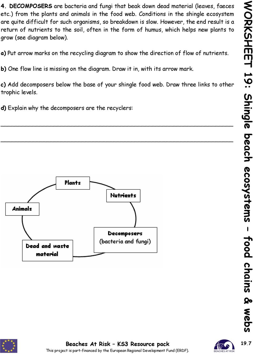 Worksheet 19 shingle beach ecosystems food chains webs pdf however the end result is a return of nutrients to the soil often in ccuart Image collections