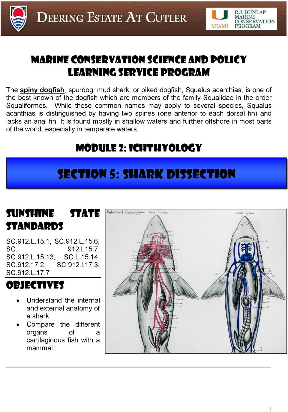 Section 5 Shark Dissection Pdf