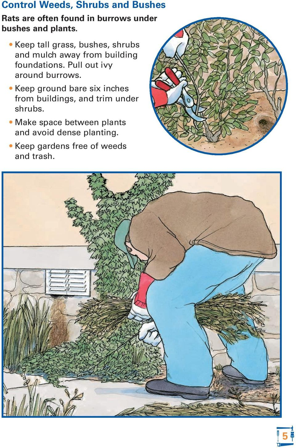 Pull out ivy around burrows.