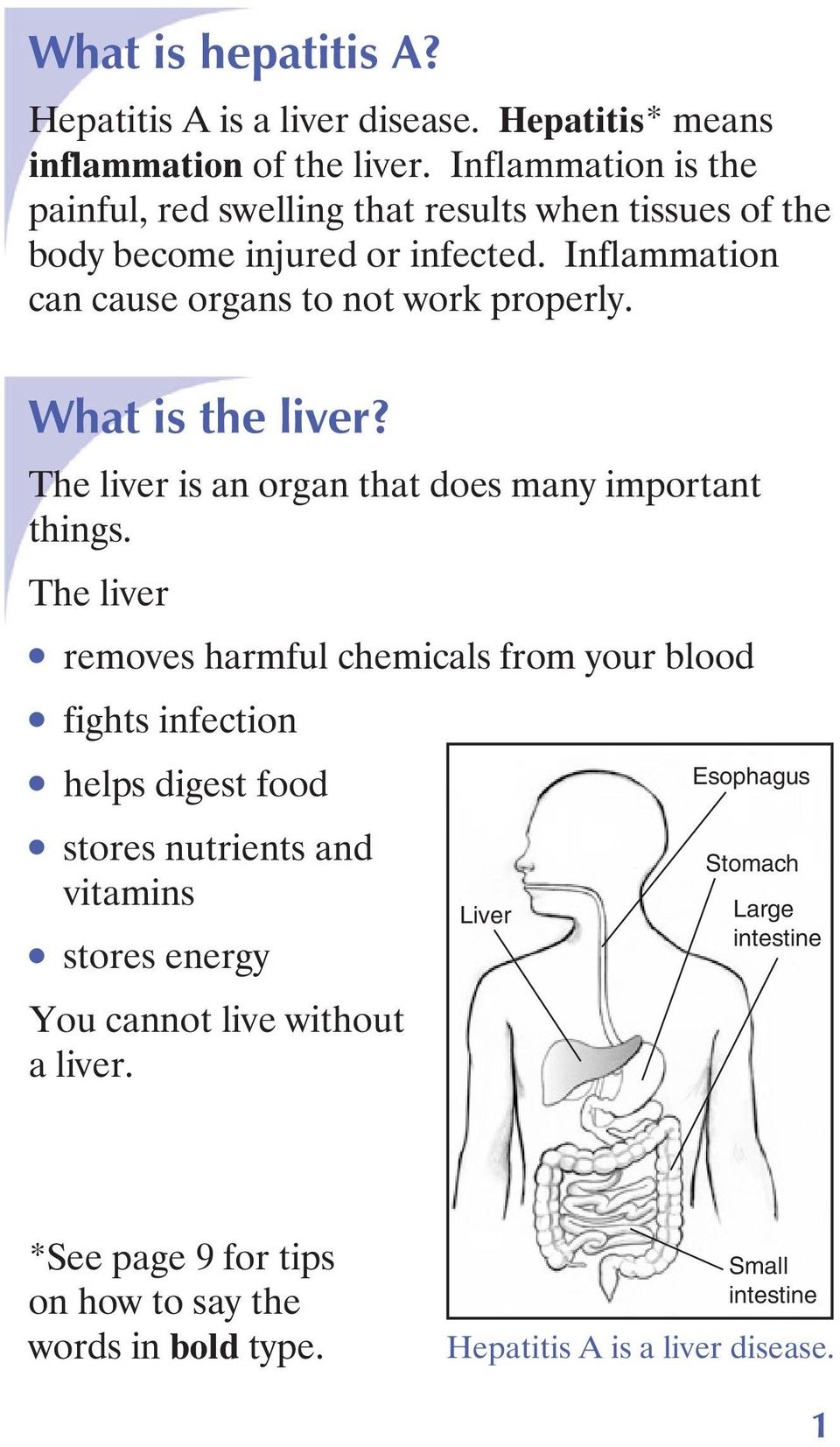 What is the liver? The liver is an organ that does many important things.