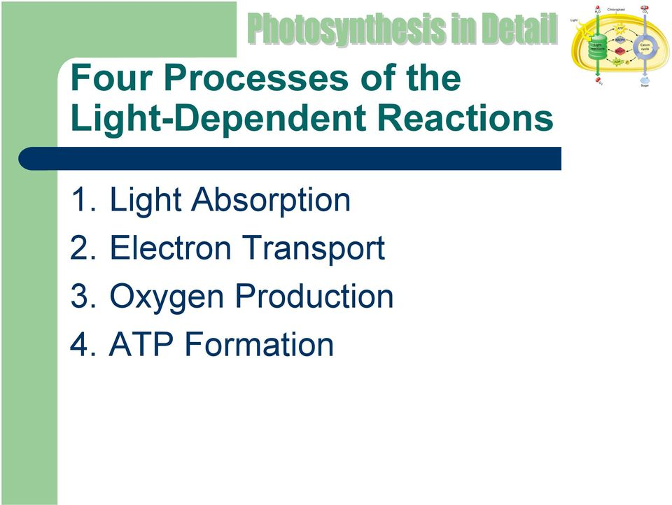 Light Absorption 2.