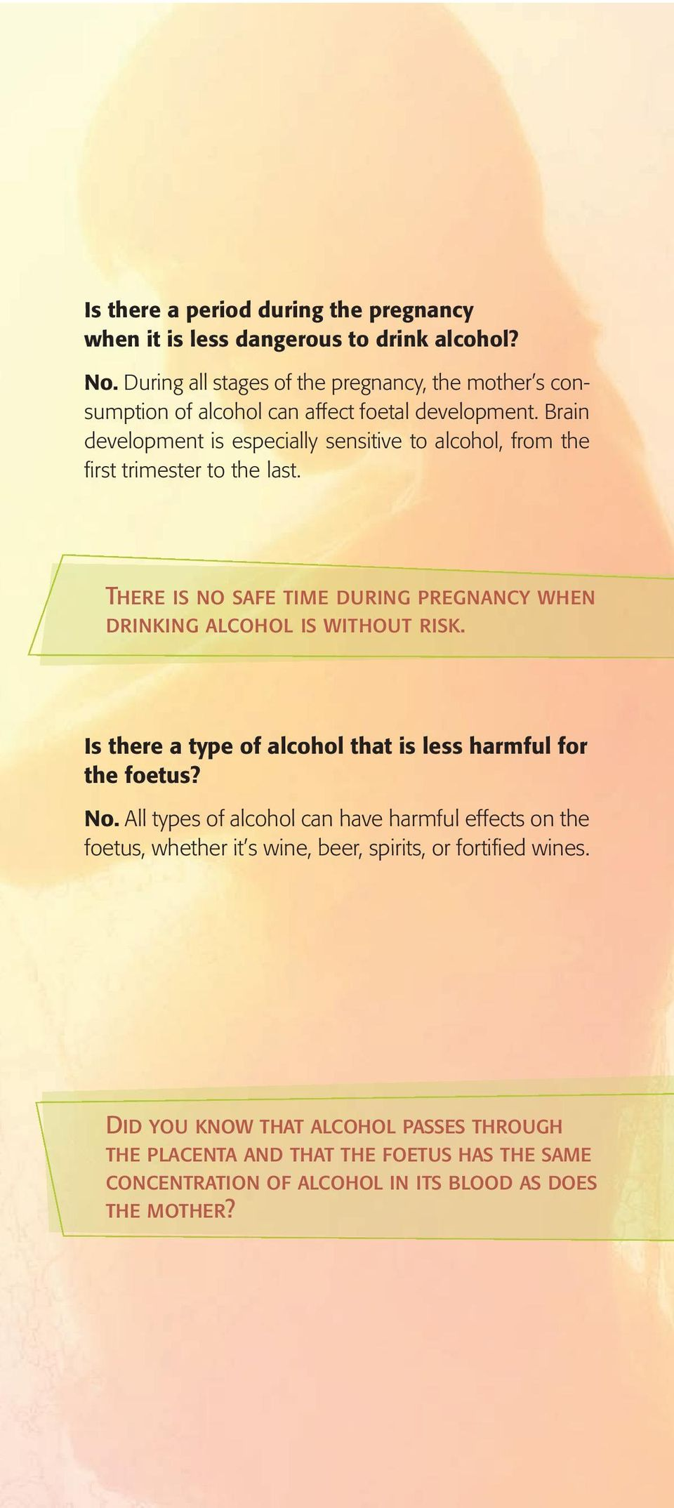 Brain development is especially sensitive to alcohol, from the first trimester to the last. There is no safe time during pregnancy when drinking alcohol is without risk.