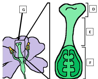 Amoeba Sisters Flowering Reproduction In Angiosperms Video Review Pdf