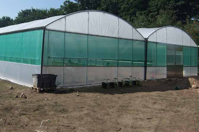 UVI Clear Polythene Repair tape 150mm x 25m for polytunnels greenhouses