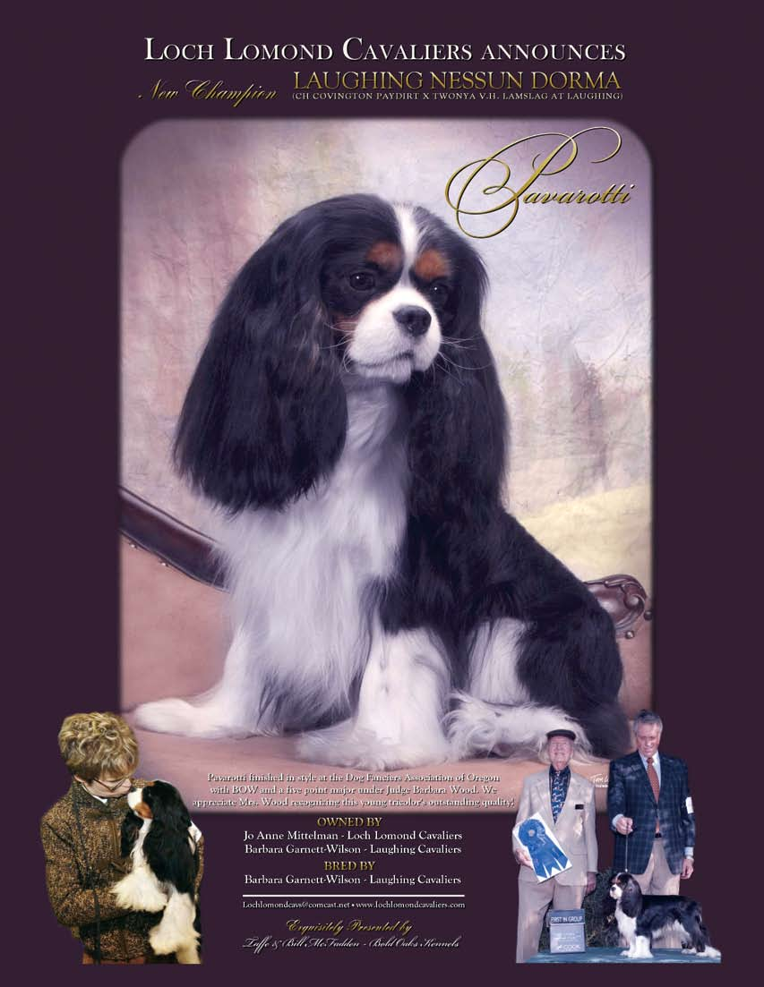 The Official Quarterly of the American Cavalier King Charles